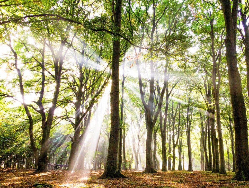 strijklicht tussen de bomen zoals de energie die een mens uitstraalt, Soul Reading